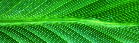 Green leaves header.jpg
